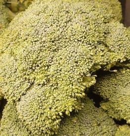 Broccoli bio (ES)
