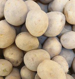 Kartoffel Bintje (mehligkochend) (CH)