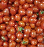 Tomaten Datteln (IT)