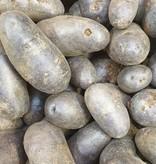 Kartoffel St. Galler blau (CH)
