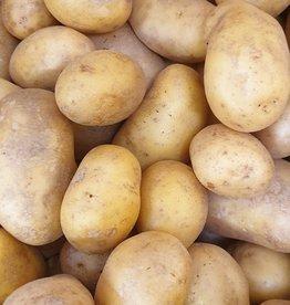Kartoffel Charlotte festkochend (CH)