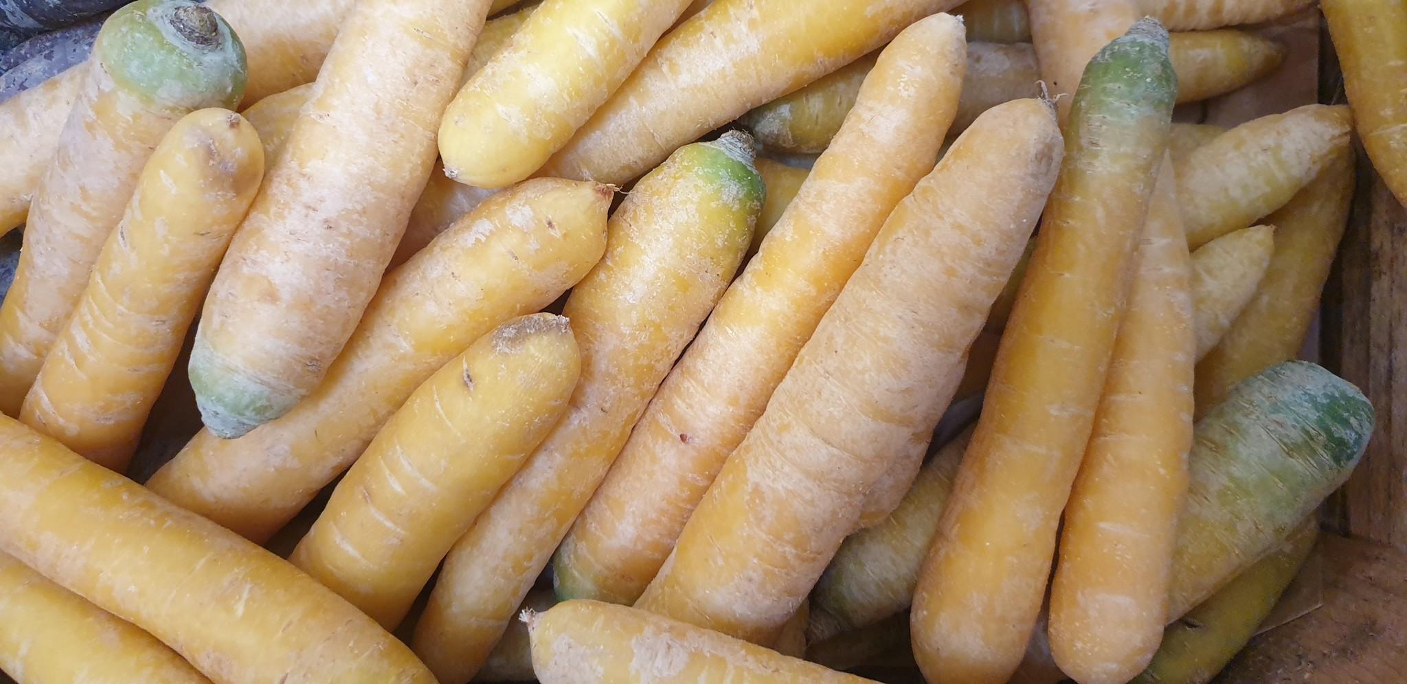Karotten Pfälzer (CH)
