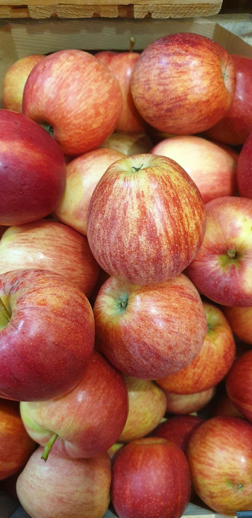 Apfel Gala (CH)