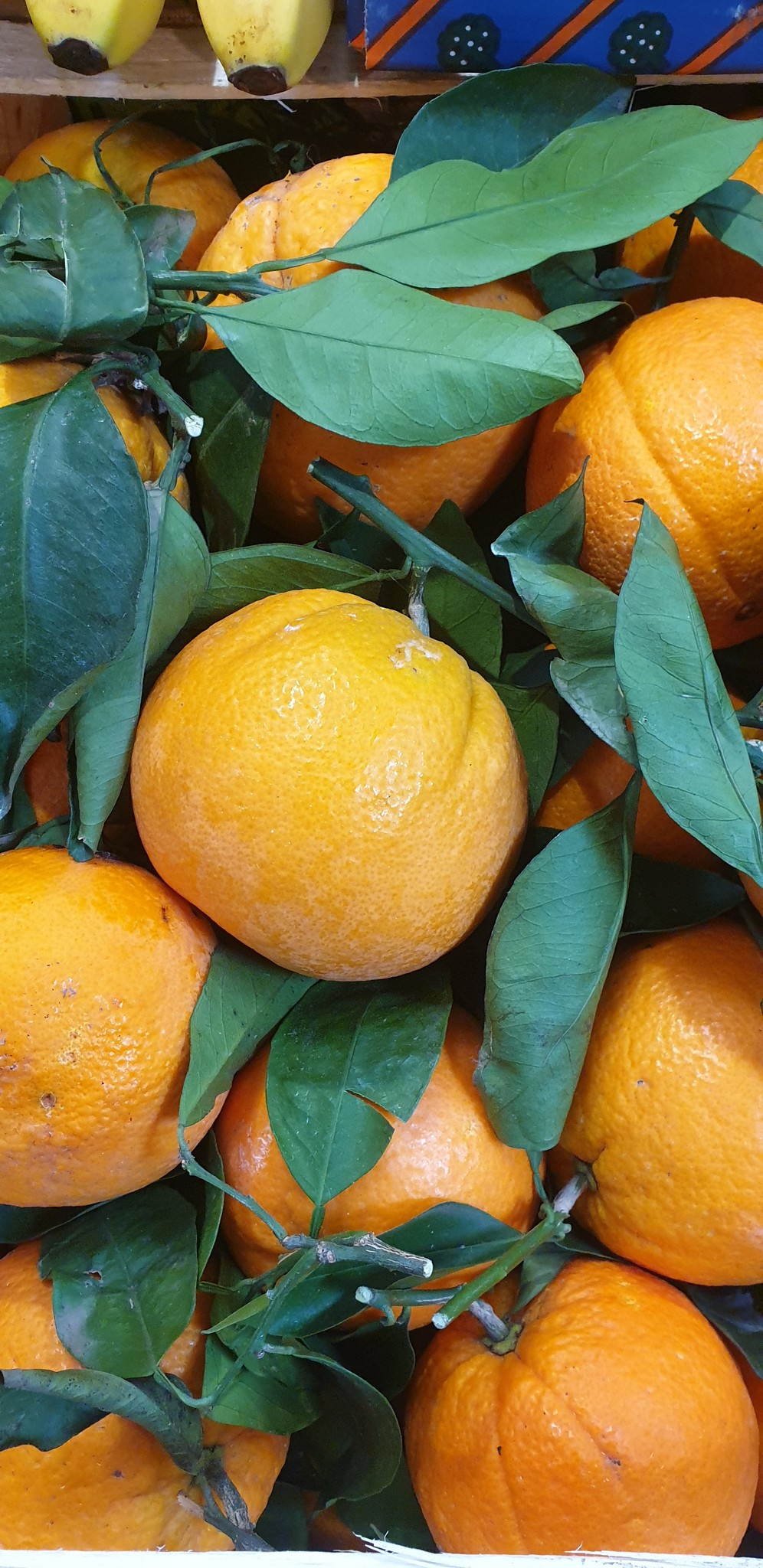 Orangen mit Blatt (IT)