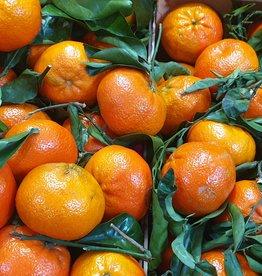 Clementine mit Blatt (ES)