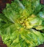 Salat Lavata (IT)