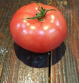 Berner Rosen Tomaten (CH)