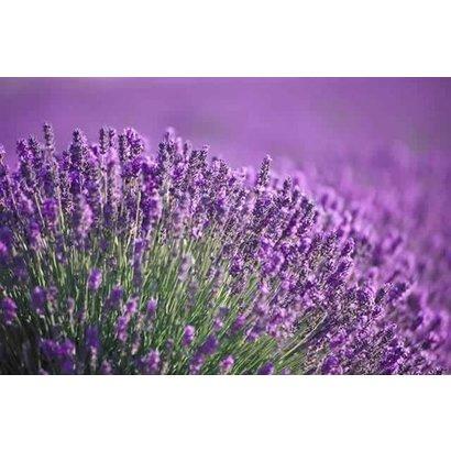Hanging Parfums Hanging Parfum - Lavendel