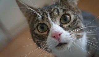 5 dingen die je kunt doen vóór het kattenhaar verwijderen