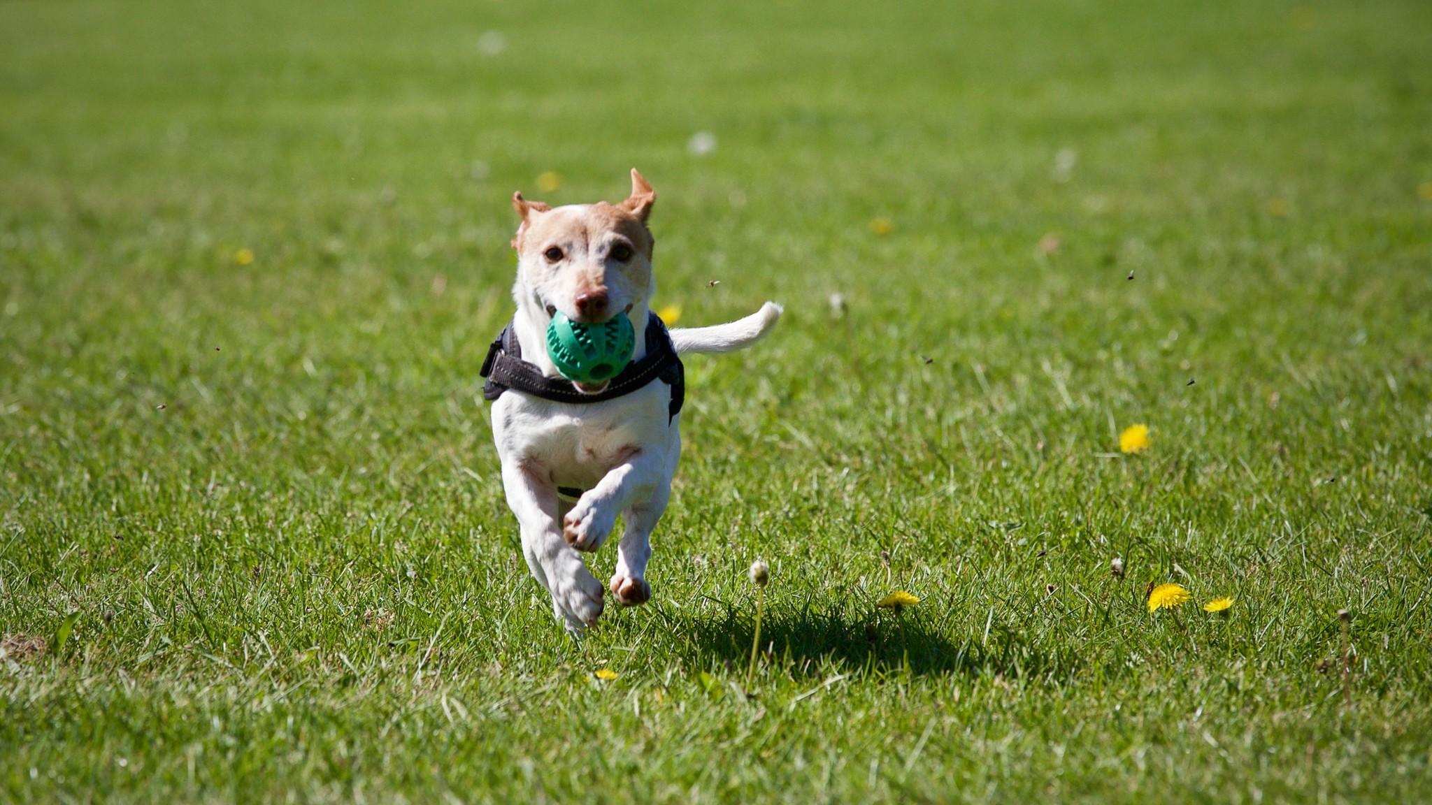 5 weetjes voor je eerste honden wedstrijd!