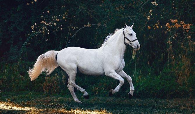Dit zijn de 5 mooiste scheermodellen voor je paard!