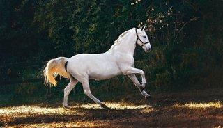 De juiste deken bij het juiste paard: 4 indicatoren om rekening mee te houden