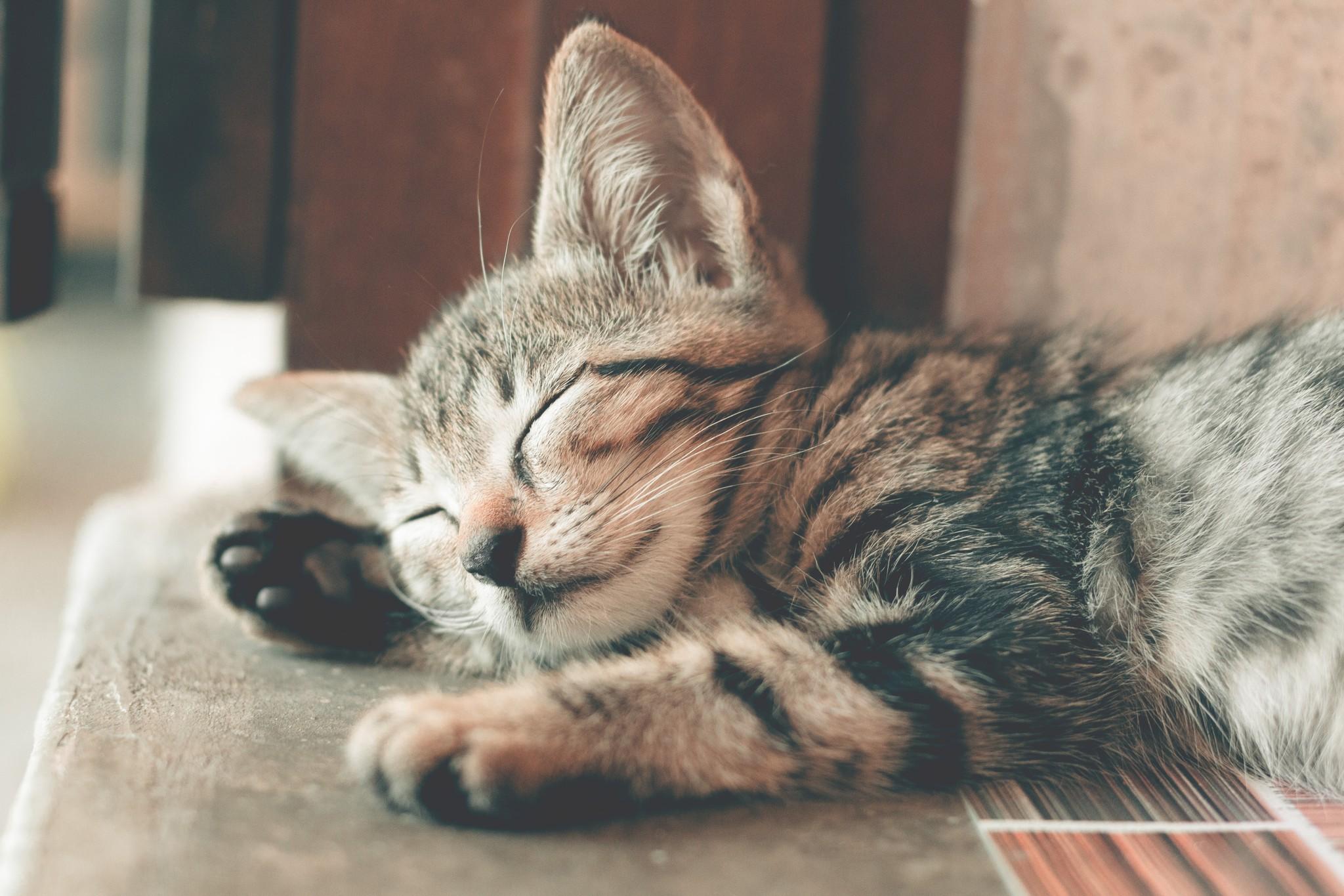 Afweging | Katten trimsalon of zelf kat scheren?