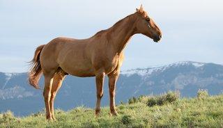 De perfecte paardenstal voor jouw paard: tips & tricks