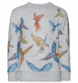 Ao76 Sweater Parrots
