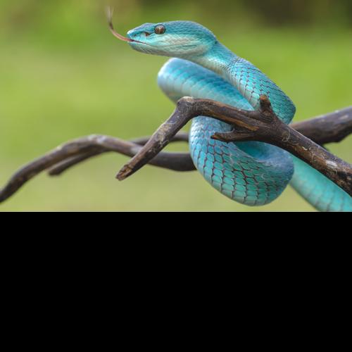 Producten: Speciaal voor reptielen