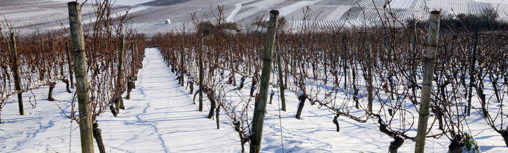 Wat gebeurt er in de winter in de wijngaard?