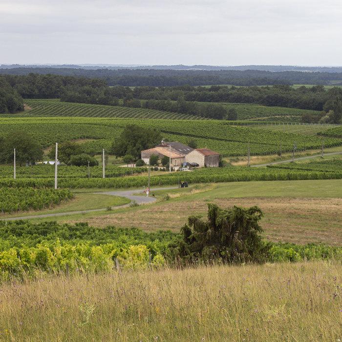 Bordeaux wijnen in de kijker