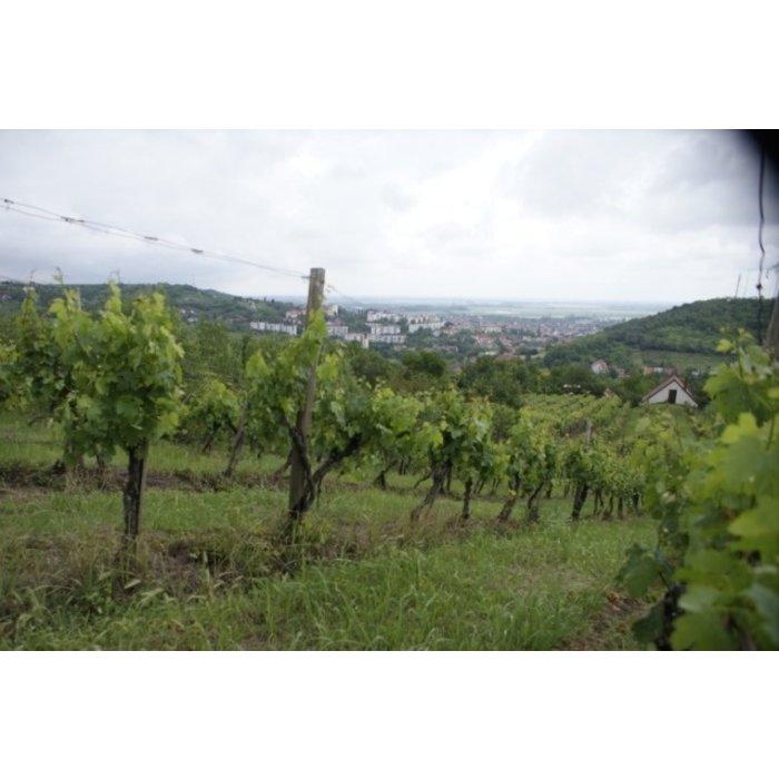- Hidaspetre Cabernet Franc Reserve 2018