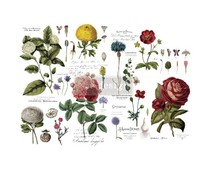 Re-Design with Prima Vintage Botanical 48x35 Inch Decor Transfers (646509)