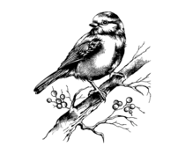 Crafty Individuals Bluebird and Branch with Berries Unmounted Rubber Stamps (CI-505)