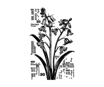 Crafty Individuals Counting Bluebells Unmounted Rubber Stamps (CI-572)