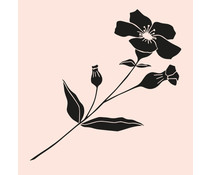 Colop Wildflower Nude M&B Rubber Stamps (MB0066)