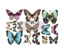 Re-Design with Prima Decor Transfers 6x12 Inch Butterfly (3 Sheets) (655969)