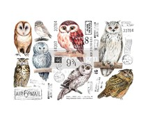 Re-Design with Prima Decor Transfers 6x12 Inch Owl (3 Sheets) (656010)
