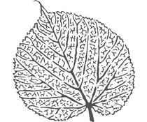 The Crafter's Workshop Skeletal Leaf 6x6 Inch Stencil (TCW953s)