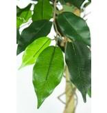 Kunstplant Ficus Groen 90 cm