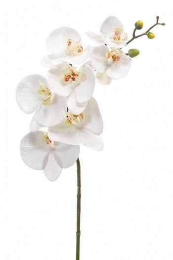 Phalaenopsis orchidee kunstbloem wit 83 cm