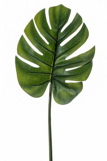 Monstera (gatenplant) kunstblad 73 cm