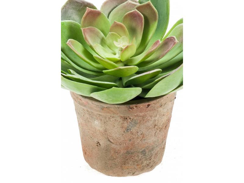 Kunst vetplant Echeveria d20cm