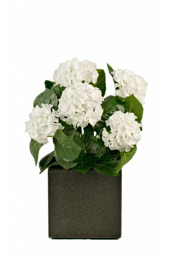 Witte kunst hortensia 40cm in pot