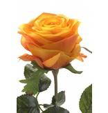 Oranje kunstroos Simone 45 cm