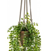 Kunst Ficus pumila hangplant 80cm