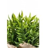 Kunstplant Ruscus 20cm