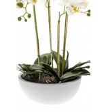 Kunst Phalaenopsis orchidee wit 60 cm