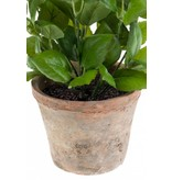 Kunstplant basilicum 25cm