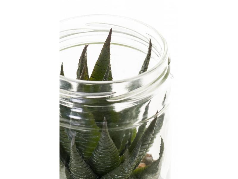 Kunst vetplant in glazen pot 13cm
