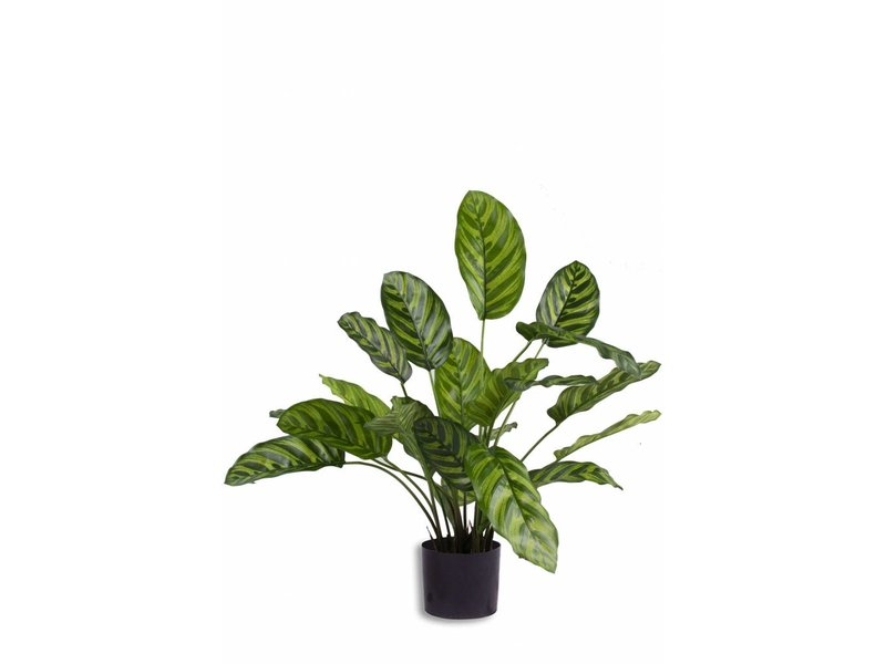 Kunstplant Calathea Makoyana 60cm