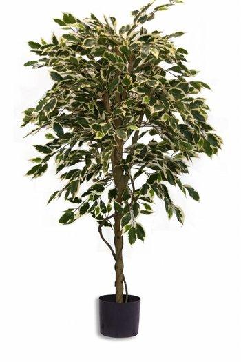 Kunstplant Ficus Bont 1.50m