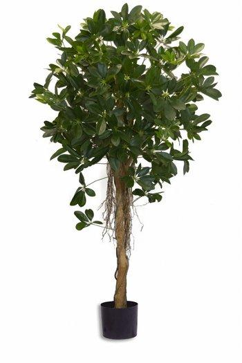 Kunstplant Schefflera klein blad 150cm