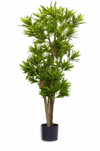 Kunstplant Dracena Reflexa 150 cm