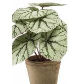 Kunstplant Begonia grijs 25cm in pot