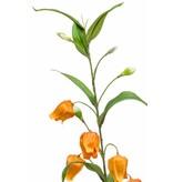 Kunst Sandersonia tak 95cm oranje