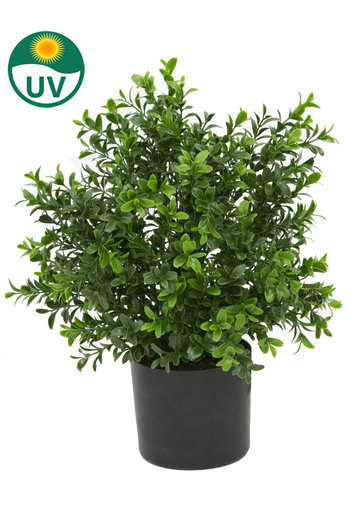 Kunstplant buxus mini 36cm in pot UV