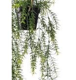 Kunst Asparagus hangplant 50cm in pot