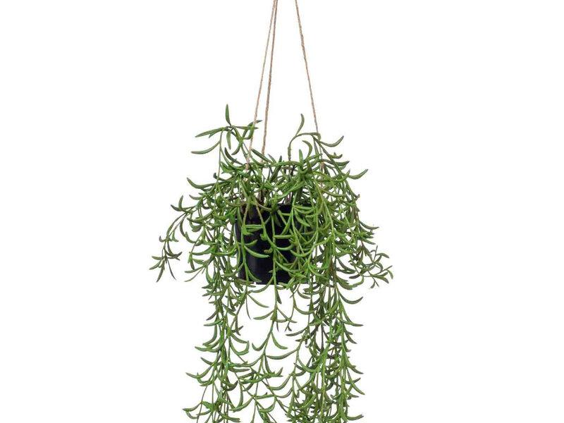 Kunst Senecio hangplant 70cm in pot
